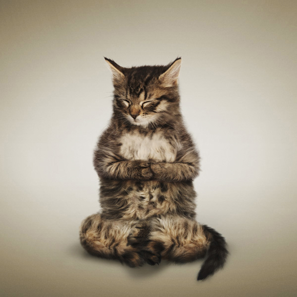Da_Borris_kitten_1.png