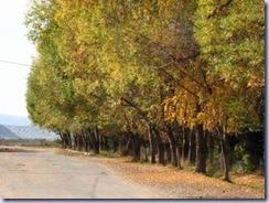 街路樹の紅葉