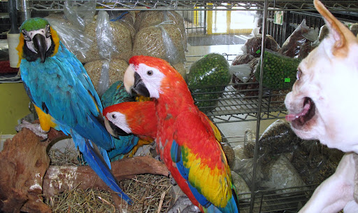 These macaws were almost too bright to look at, and besides, they did not want to play.