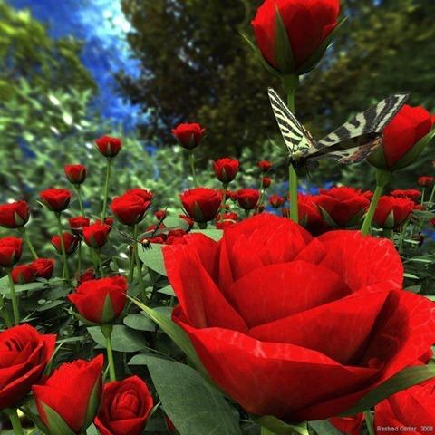 rosa-vermelha-no-jardim
