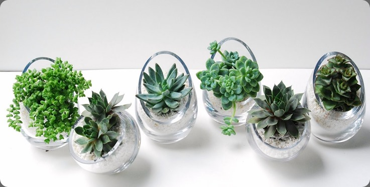 Space-Babies-line-up seed floral