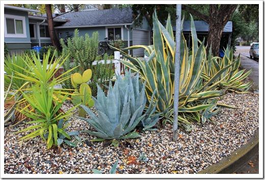 121202_Davis_succulent_garden11