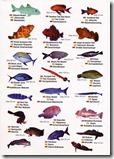 fauna marina II