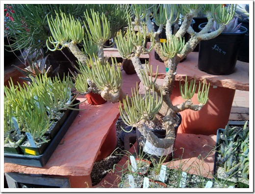 130403_StaBarbara_Terra-Sol-Garden-Center_012