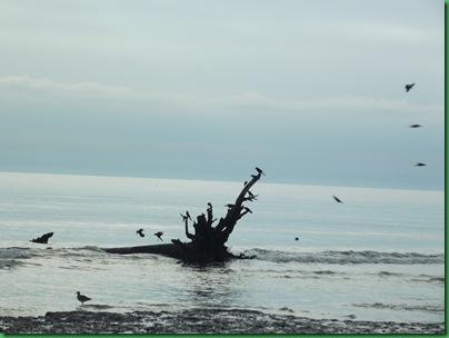 Ocean front walk 026