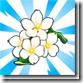 viral_cherryblossompark_white_blossoms_75x75[3]