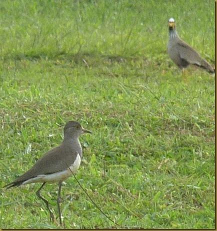birds April 7, 2012 103