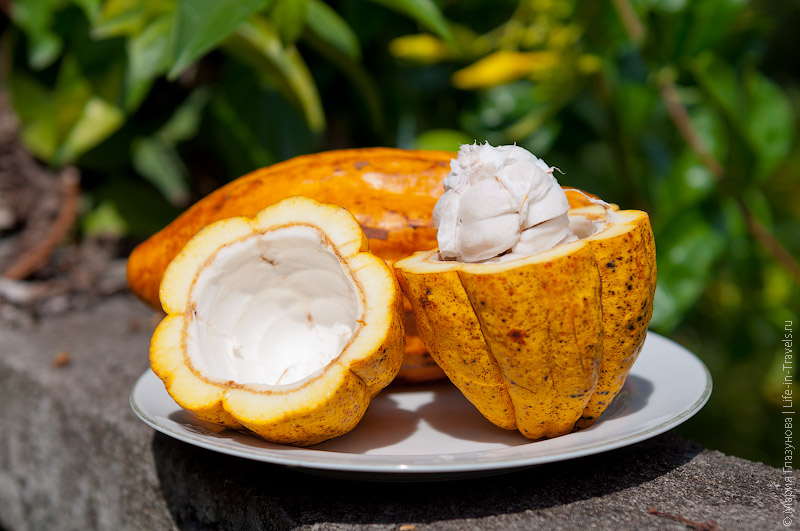 Плоды какао, Бали, Индонезия
