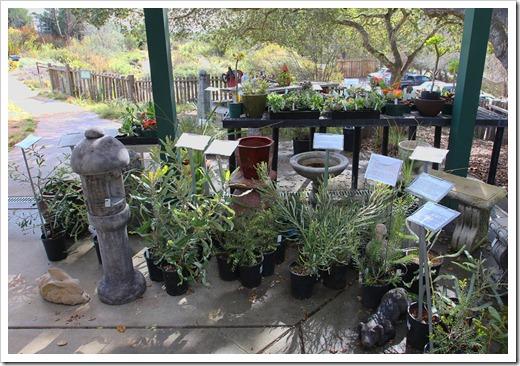 120211_UCSC_Arboretum_255