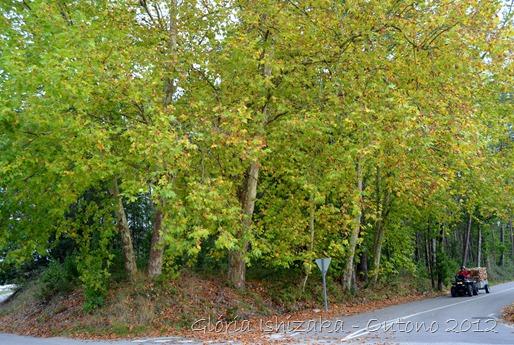 Glória Ishizaka - Folhas de Outono - Portugal 36