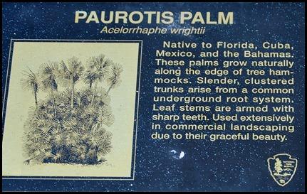 02 - morning bike ride- Paurotis Palm Sign