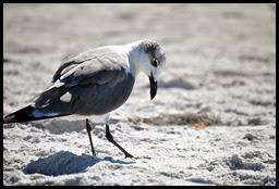 02a - Sea Gull