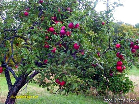 One of our bountiful trees