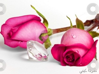 -Two-Pink-Roses