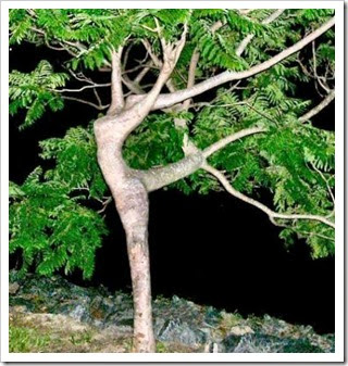 Dancing-Tree
