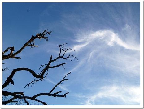 111231_tree_silhouette_15