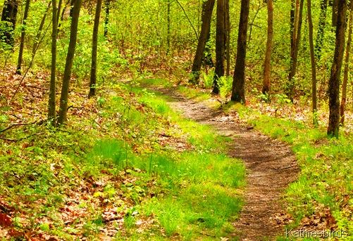 12. path along riverbank-kab