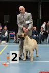 20130510-Bullmastiff-Worldcup-0938.jpg