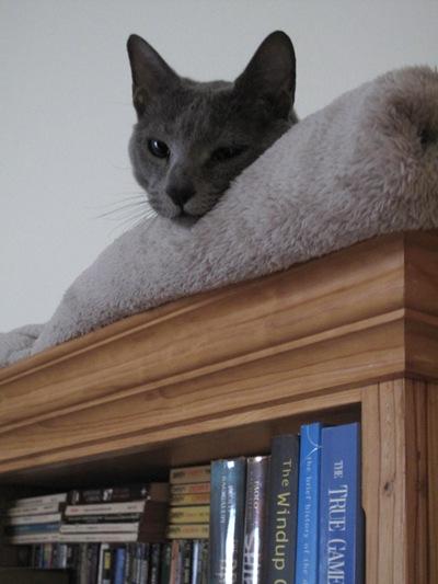 talya_bookcase1