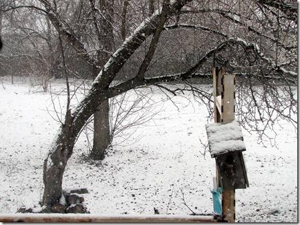 Snow12-31-12c