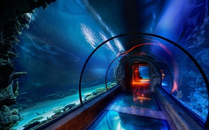 underwater-tunnel-at-mandelay-bay-las-vegas-799x500