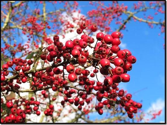 0460berries1