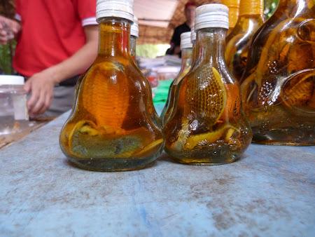 14. serpi in coniac vietnamez.JPG