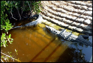 09d - Marina - Crocodiles