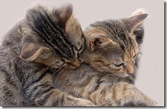 funny_two_cats_in_love