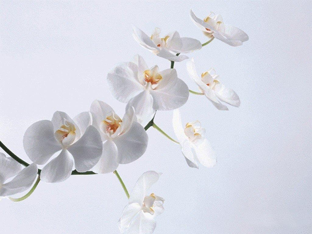 Каталог цветов с картинками 8