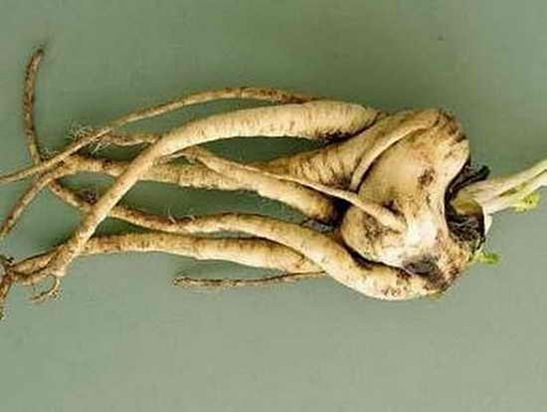 creepiest_vegetables_05