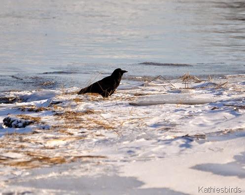 DSC_0475 Crow Bath, ME