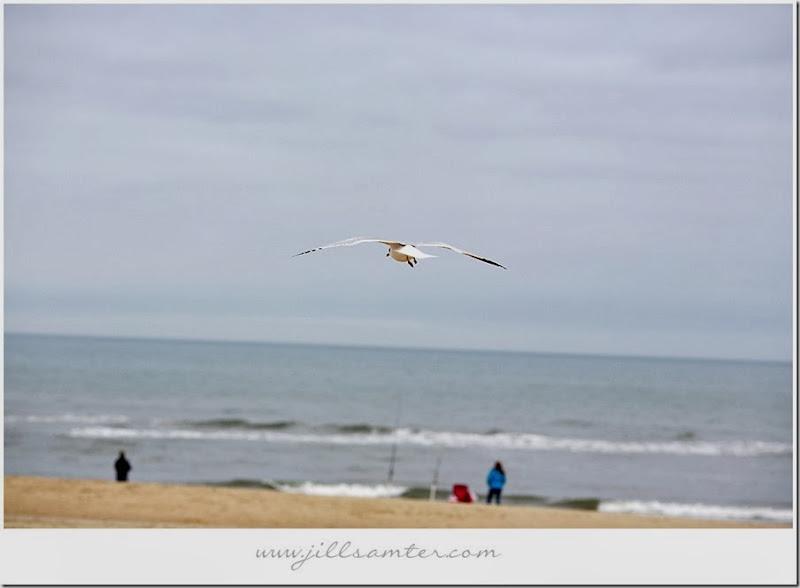 birdsoars1