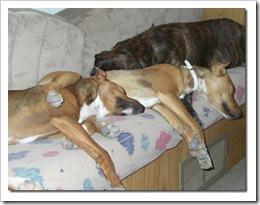Bodega, dogs, lavadero, flowers 012_thumb[3]