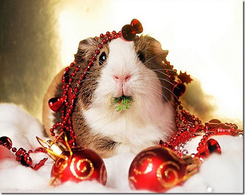 Cute-Christmas-Animals-23