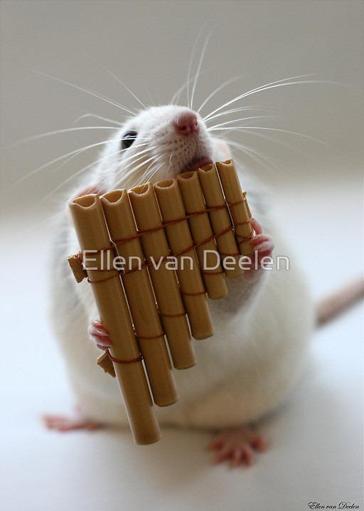 rat-musicians-004