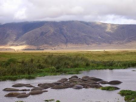Hipopotami - safari Tanzania