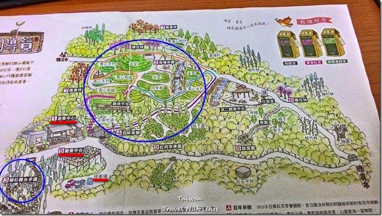 三峽熊空茶園 (1)