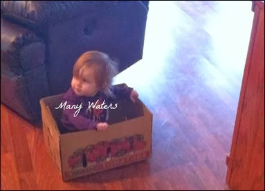Many Waters Munchkin in a Box