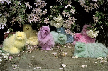 Tim Walker, Pastel Cats