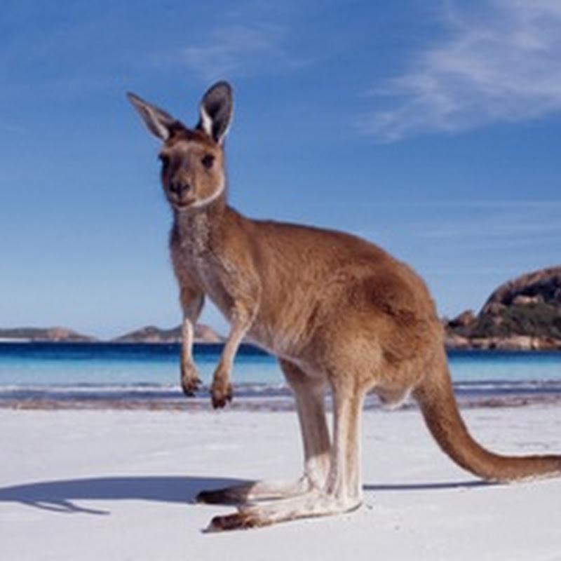 En Australia la temperatura subirá 5º en 2070 a causa del cambio climático