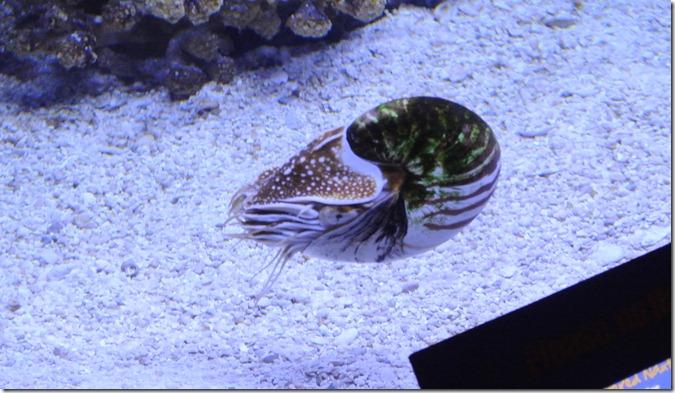 Sea Life Aquarium 090