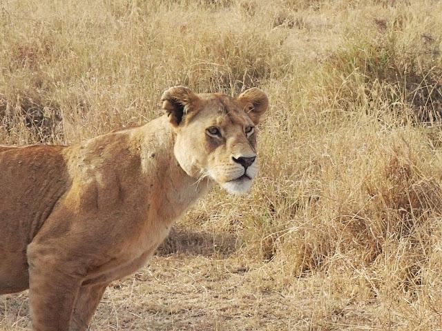 Serengeti2 027.JPG