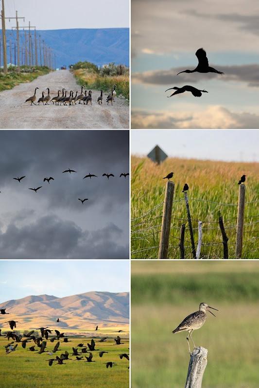 2012-07 eli's bird watching