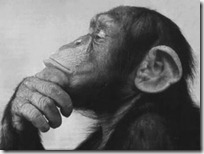 monos piensan blogdeimagenes (12)