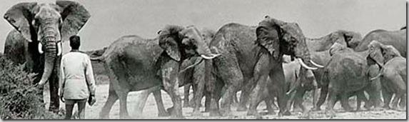 59_ricciardi_elephant