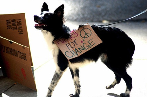 cute-pets-at-occupy-wall-street-15