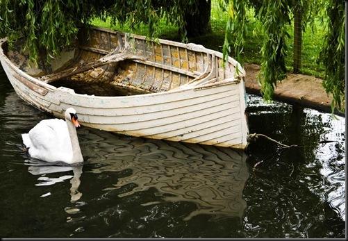 Stone, P. - Swan & Boat - 2010