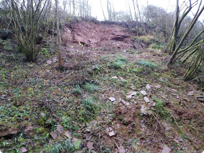 SAM_0013 Landslip, Woodseaves