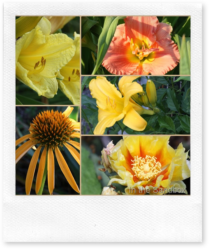yellows and orange collage